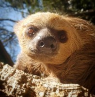 Cupons de desconto para entrada no Zooparque neste mês estão disponíveis para retirada