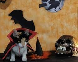 No MS, gatos e cães 'se fantasiam' no Halloween para sensibilizar por adoção